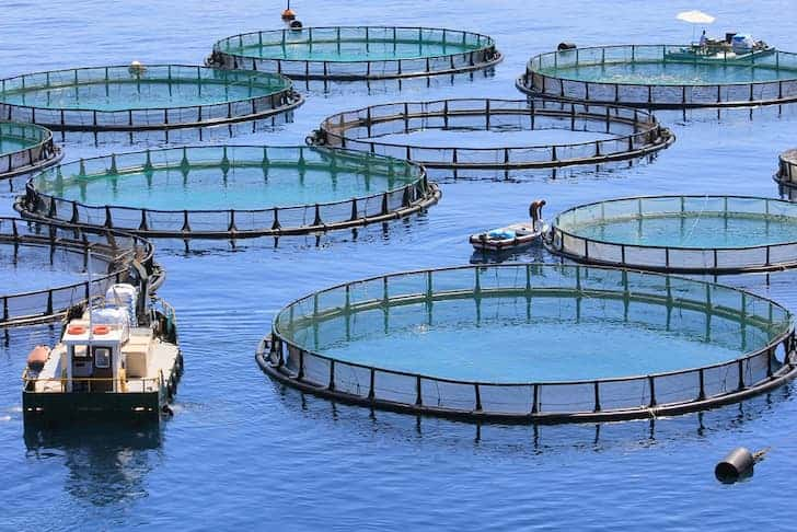 photo-fish-farm-aquaculture.jpg