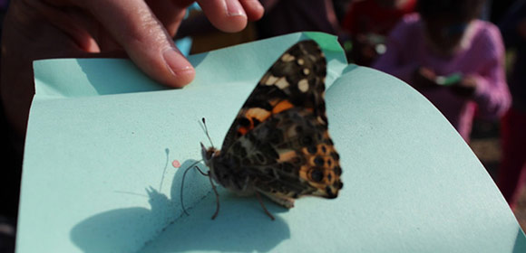 Bright Steps Forward Butterfly Release and Picnic