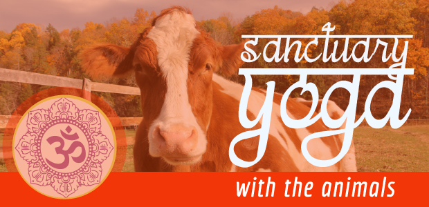 Sanctuary yoga with the animals