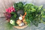 10 Week Summer CSA Share