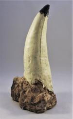T-Rex Tooth Cast - 7""