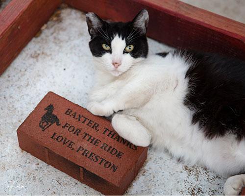 A cat sitting beside a brick
