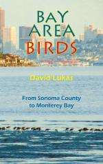 Bay Area Birds