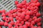 Bonnie's Raspberries