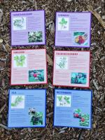 Native Berry ID Cards (set of 8)