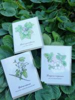 Native Berry Greeting Cards (set of 5)
