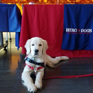 Hero Dogs Ashley