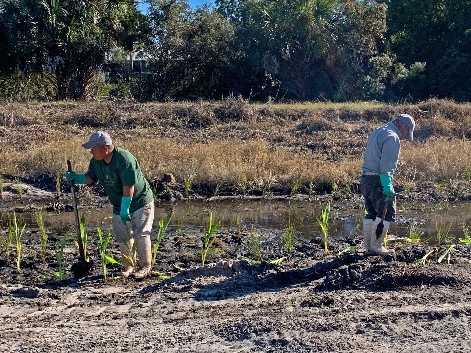 Planters working on wetland plantings