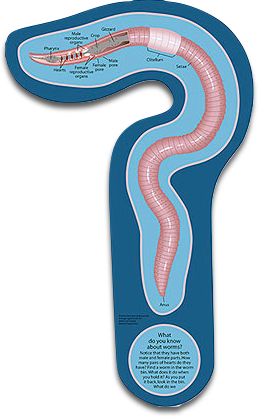 Worm Sign