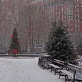Christmas trees in Gramercy Park, New York City