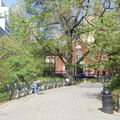 tree lined walkway in Stuyvesant Town, New York City