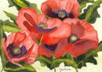 Biles, Janet: Red Poppies
