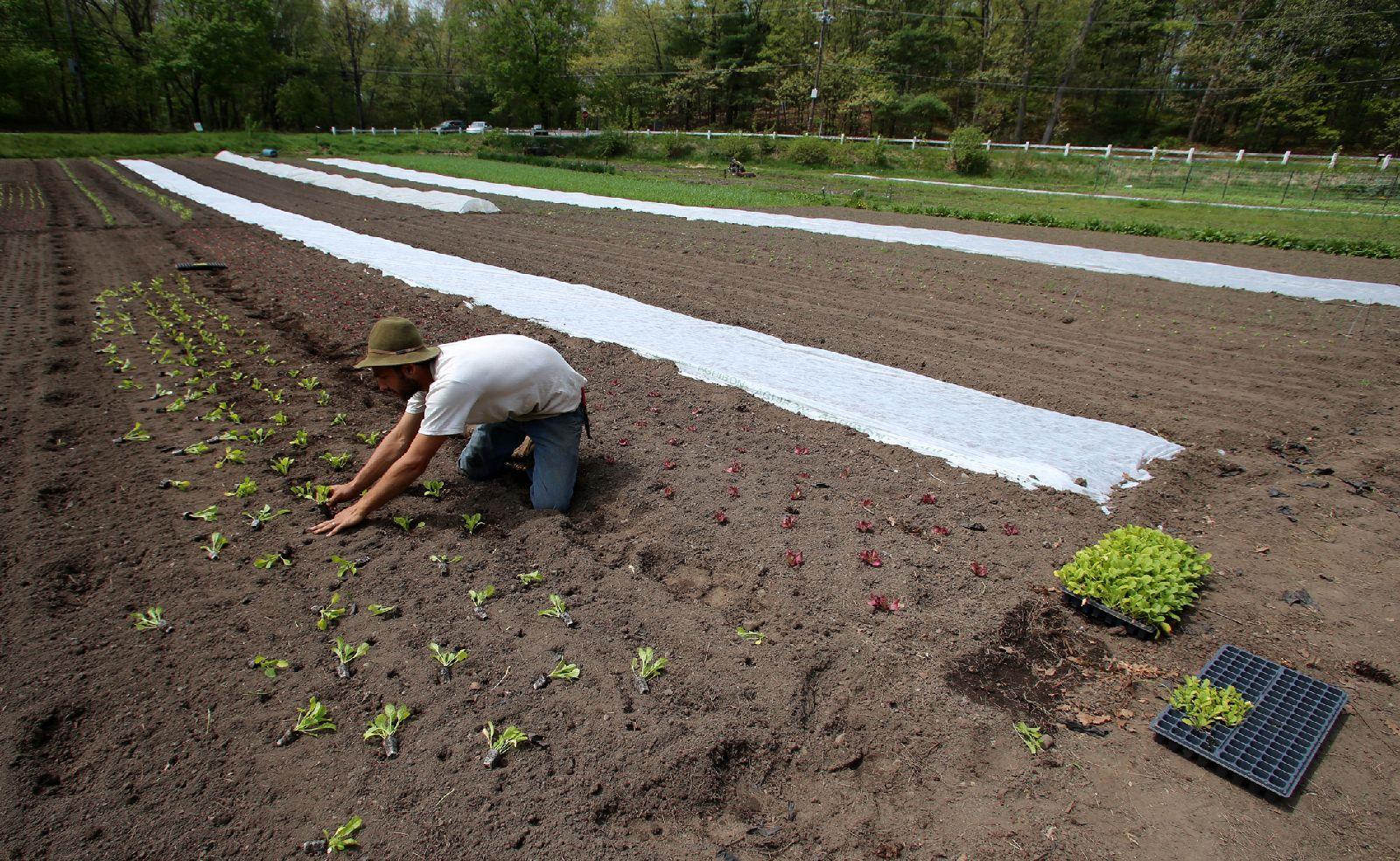 Dan_planting_5_14.jpg