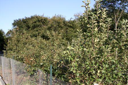 Orchard_10_12.JPG