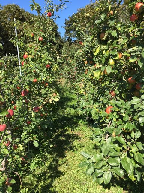 Orchard_10_17.jpg