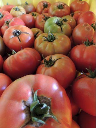 Tomatoes_8_12.JPG