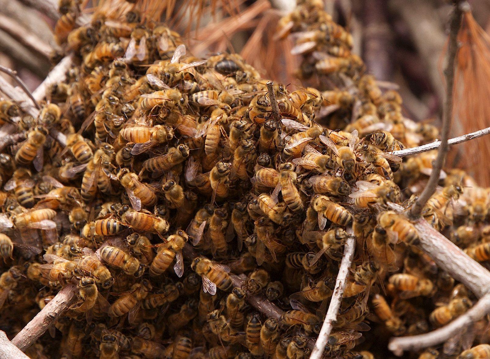 bees_6_17.jpg