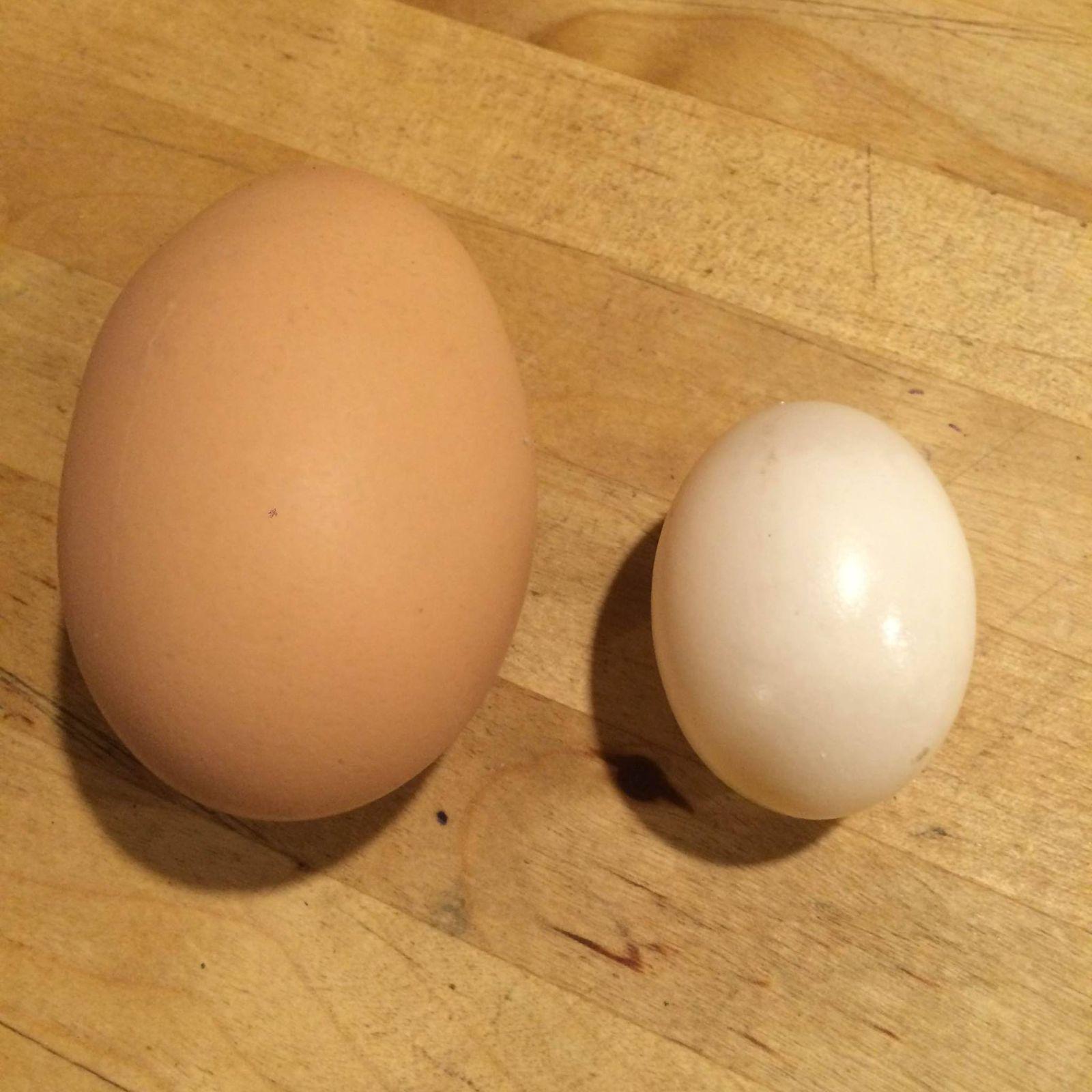 dove_egg_7_16.jpg