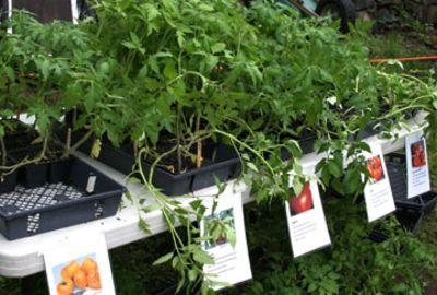 seedling_sale_plants.jpg