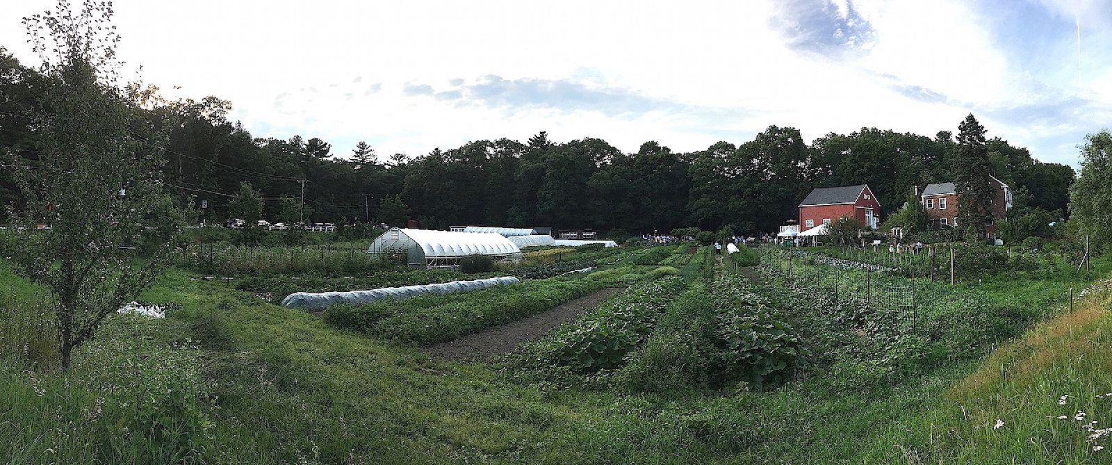 view_of_farm_8_17.jpg
