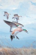 579 2009 American Wigeon Framed or Unframed