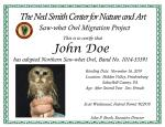Saw-Whet Owl Adoptions 5250
