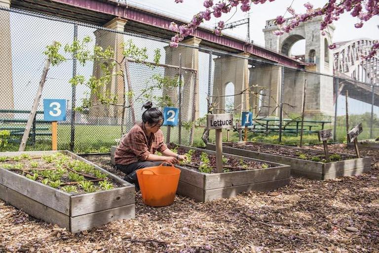 Christina Chan farming
