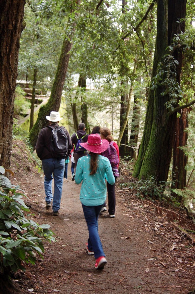 Hikers in Redwoods