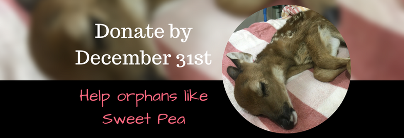 Help orphans like Sweet Pea. Donate by December 31st.