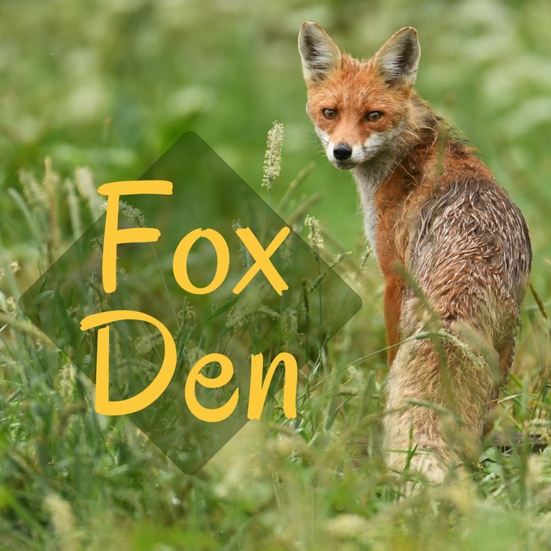 Fox Rescue - Help Foxes Recover